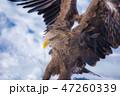 知床 冬 47260339