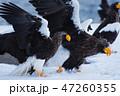 知床 冬 47260355