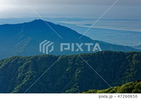 丹沢稜線から見る大山と湘南の海 47260650