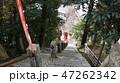 琵琶湖・竹生島宝厳寺への長い参拝階段上から 47262342