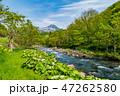 風景 山 初夏の写真 47262580
