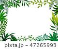 フレーム 葉 新緑のイラスト 47265993