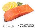 サケ サーモン 鮭の写真 47267832