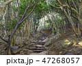 福岡県糸島市 芥屋の大門公園 森のトンネル 47268057