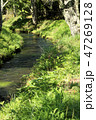 忍野八海 緑 自然の写真 47269128