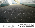 落ち葉が歩道にプリントされていた 47278880