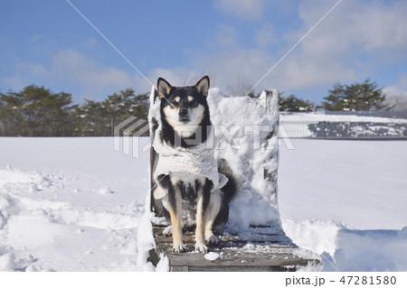 雪原の椅子と黒柴 47281580