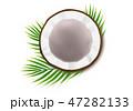 ヤシ ベクトル ココナッツのイラスト 47282133