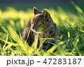 猫散歩3 47283187