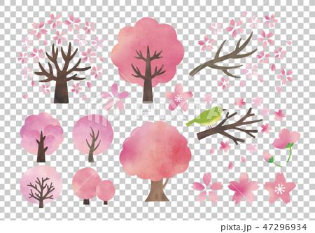 櫻桃樹水彩畫集 47296934