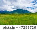 戦場ヶ原 男体山 湿原の写真 47299726