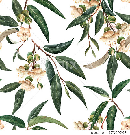 Watercolor durian tropical vector seamless pattern 47300293