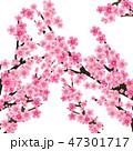 さくら サクラ 桜のイラスト 47301717