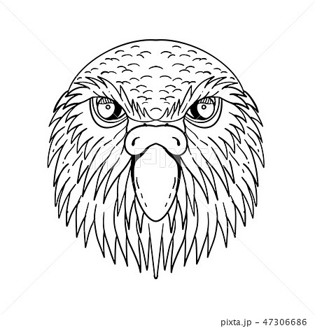 Kakapo Owl Parrot Head Drawing Black and White 47306686