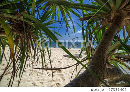 Palms, sea and beautiful tropical secret beach 47331405