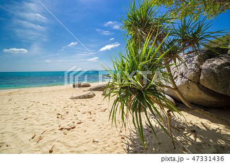 Palms, sea and beautiful tropical secret beach 47331436