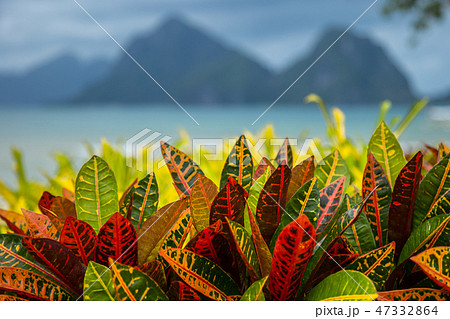 Turquoise sea and mountain background with tropical colorful leaves foreground in El Nido 47332864