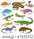 動物 とかげ トカゲのイラスト 47335522