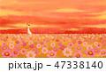 あき 秋 コスモスのイラスト 47338140