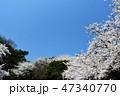 満開 青空 桜の写真 47340770