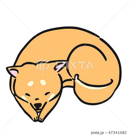 柴犬 犬 ポーズ 表情 ふせ 47341082