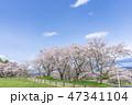 桜 宮城 晴れの写真 47341104