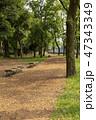 公園 ベンチ 道の写真 47343349