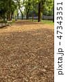公園 ベンチ 道の写真 47343351