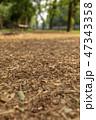 公園 道 森林の写真 47343358