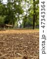 公園 道 森林の写真 47343364