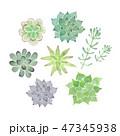 多肉植物 水彩 イラスト 47345938
