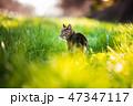 猫散歩4 47347117