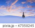 北海道_クリスマスツリーの木 47350245