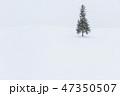 クリスマスツリーの木 北海道 コピースペースの写真 47350507