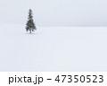 クリスマスツリーの木 北海道 コピースペースの写真 47350523