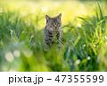 猫散歩12 47355599