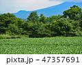 嬬恋村 キャベツ 畑の写真 47357691