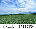嬬恋村 キャベツ 畑の写真 47357694