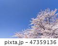 桜 春 青空の写真 47359136