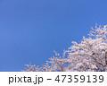 桜 春 青空の写真 47359139