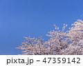 桜 春 青空の写真 47359142