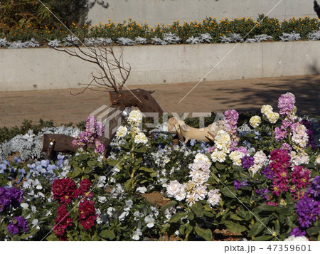 ビオラとストックの花壇に木材のトナカイのオブジェ 47359601