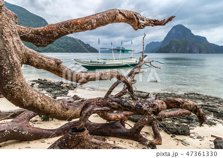 Dead tree over beach with branches on the beach sea after typhoon at cloudy dramatic day in El Nido 47361330