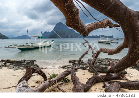 Dead tree over beach with branches on the beach sea after typhoon at cloudy dramatic day in El Nido 47361333