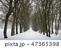 Snowfall in winter park 47365398