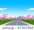 道路 風景 桜のイラスト 47365468