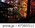 南昌荘の秋 47365511