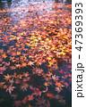 水面 落ち葉 紅葉の写真 47369393