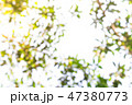 nature background 47380773