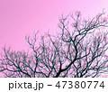 nature background 47380774